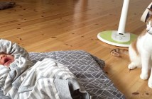 赤ちゃんの様子を見る猫