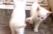 ハイタッチをスルーされた子猫