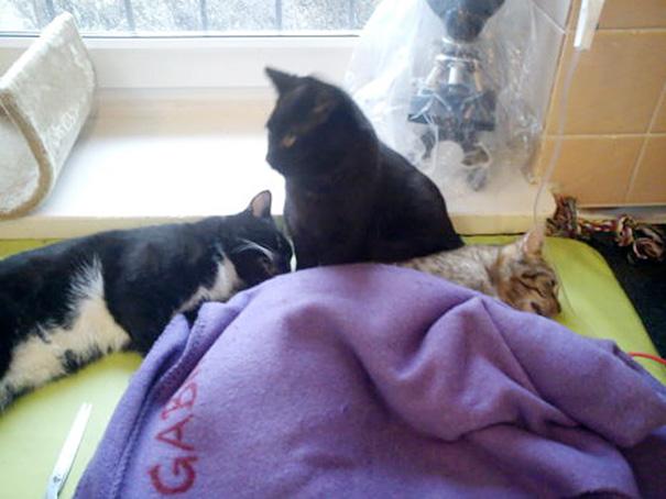 猫を見守る黒猫