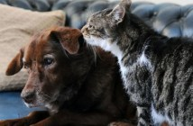 盲目の犬を助ける猫
