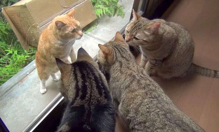 興味津々の猫