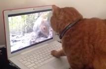リスを追いかける猫の動画
