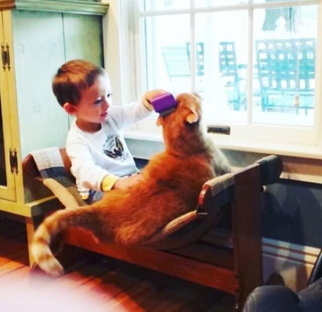 猫といっしょに遊ぶ男の子