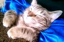 生まれて初めてのコタツにとろける子猫