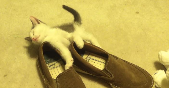 眠る寸前の子猫