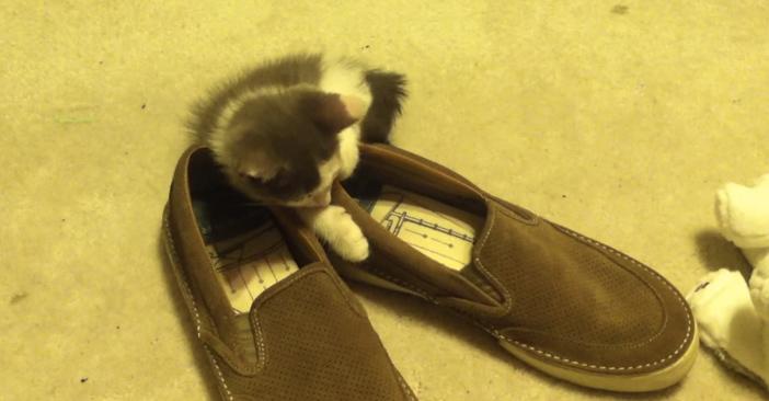 最後は靴に頭を乗せる子猫