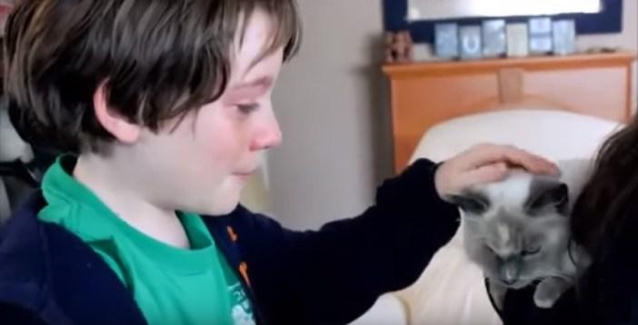 帰宅した猫を撫でる男の子