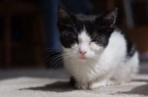 郵便受けに捨てられた猫