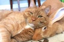 仲良しな猫とうさぎ