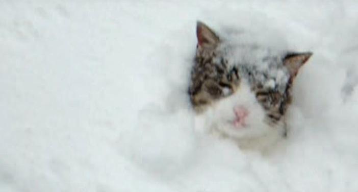 雪の中から顔を出す猫