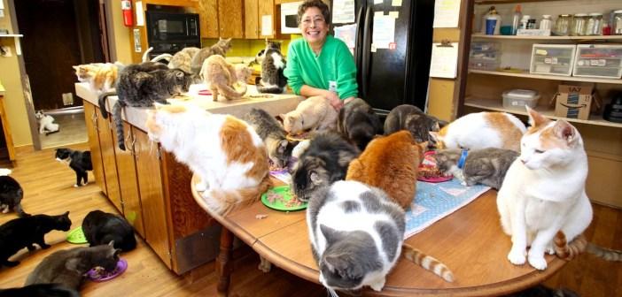 1100匹の猫と暮らす女性