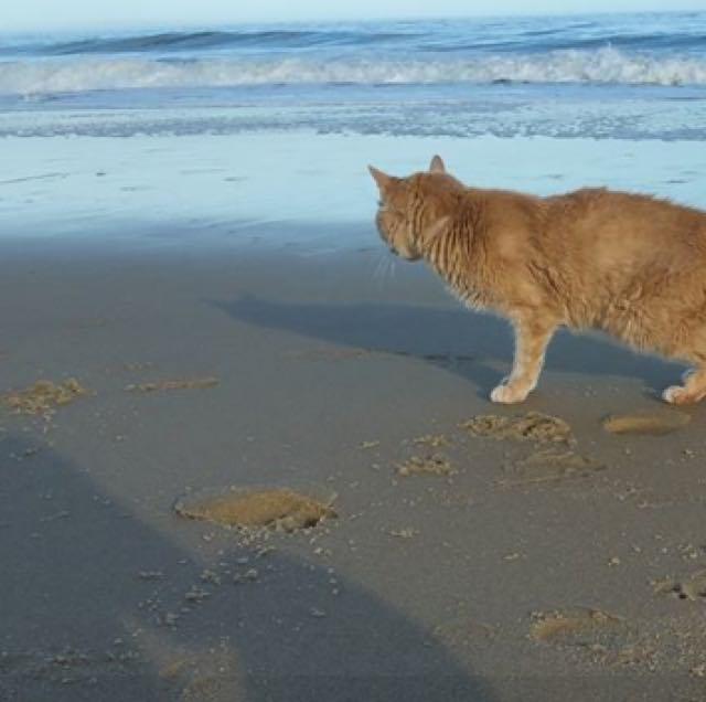 海を楽しむ猫
