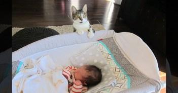 赤ちゃんにビックリする猫