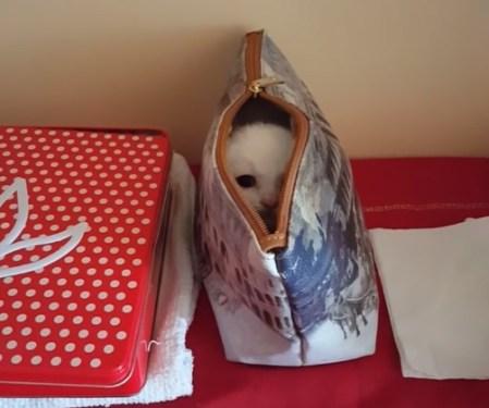 バッグに隠れる子猫