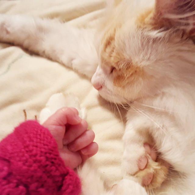 赤ちゃんといっしょにいられて幸せそうな猫