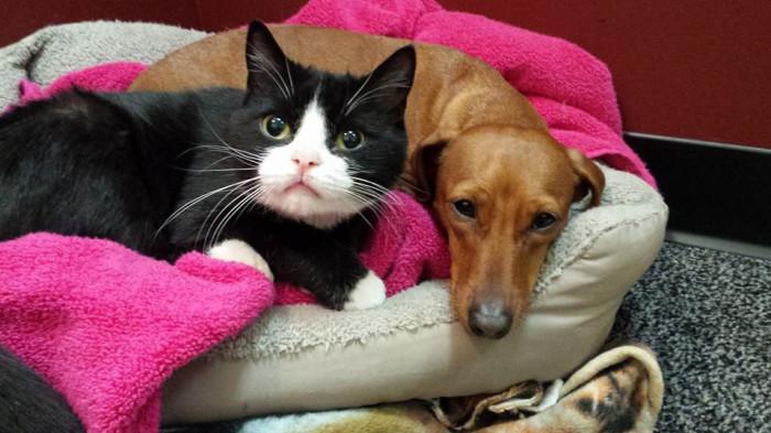 猫を守る犬
