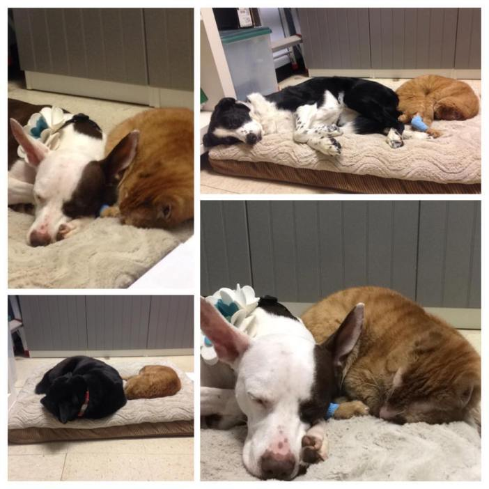 犬とラッセル