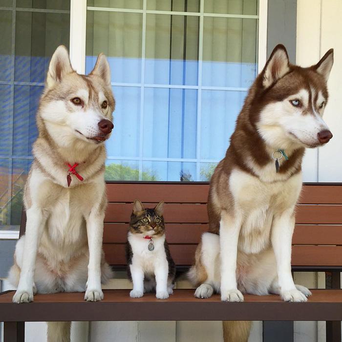 ハスキー犬と猫