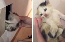 壁の中から救出された子猫