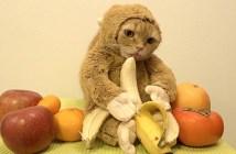 サルになった猫