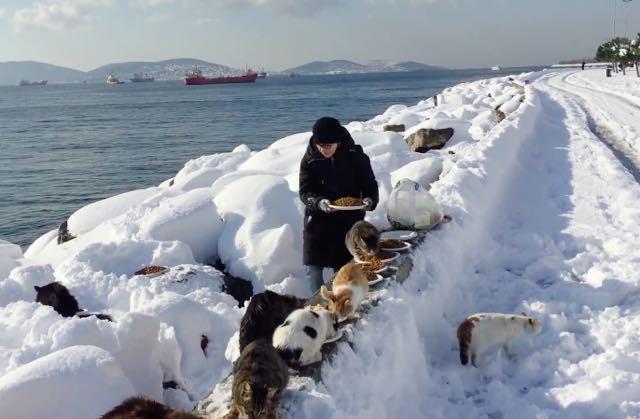 大雪の中、猫を世話する女性