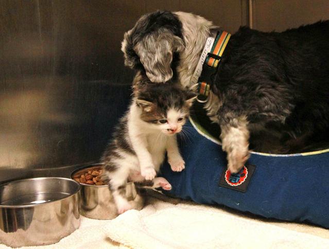 子猫の世話をする犬
