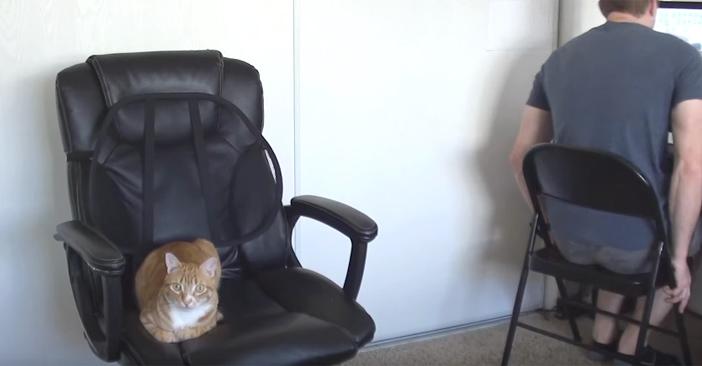 イスを取る猫