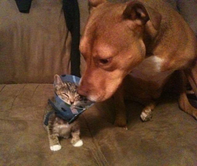 犬といっしょの猫