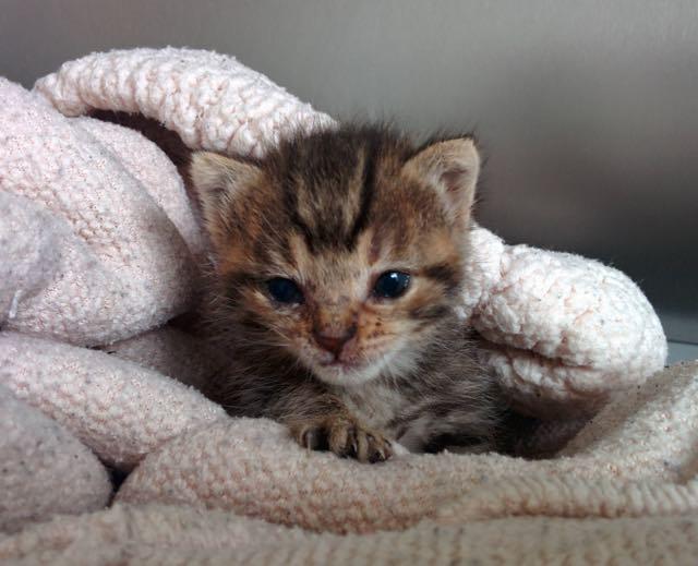 目を覚ました子猫