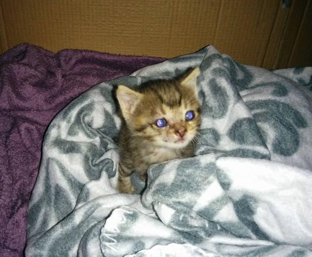 目を光らせる子猫