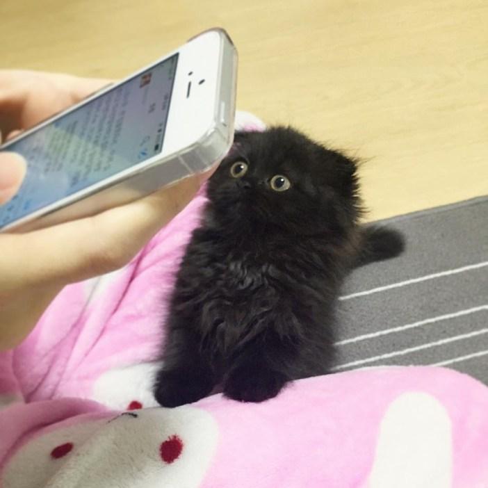 飼い主さんを気にする黒猫