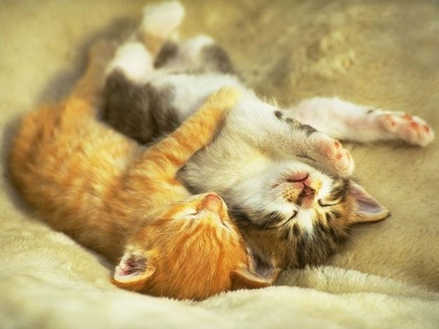 抱きしめる子猫