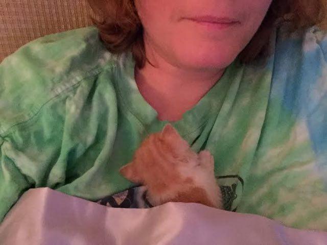 ハグされる子猫