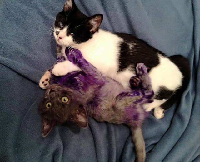 お友達と一緒の子猫