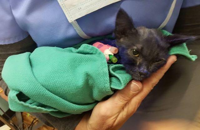 紫野子猫スマーフ