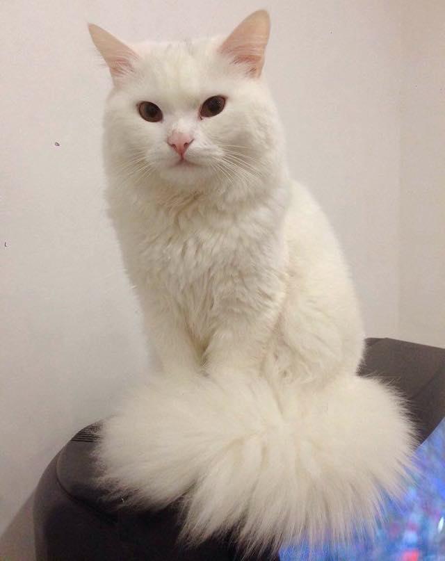 奇麗になった猫