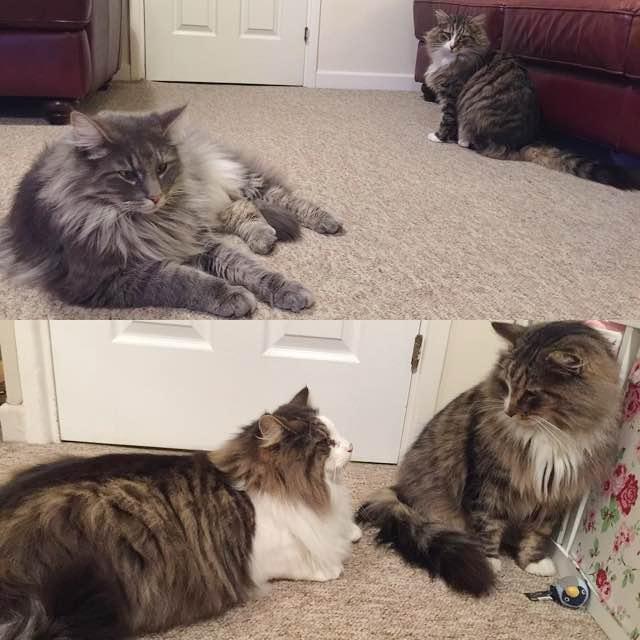 猫を見る猫