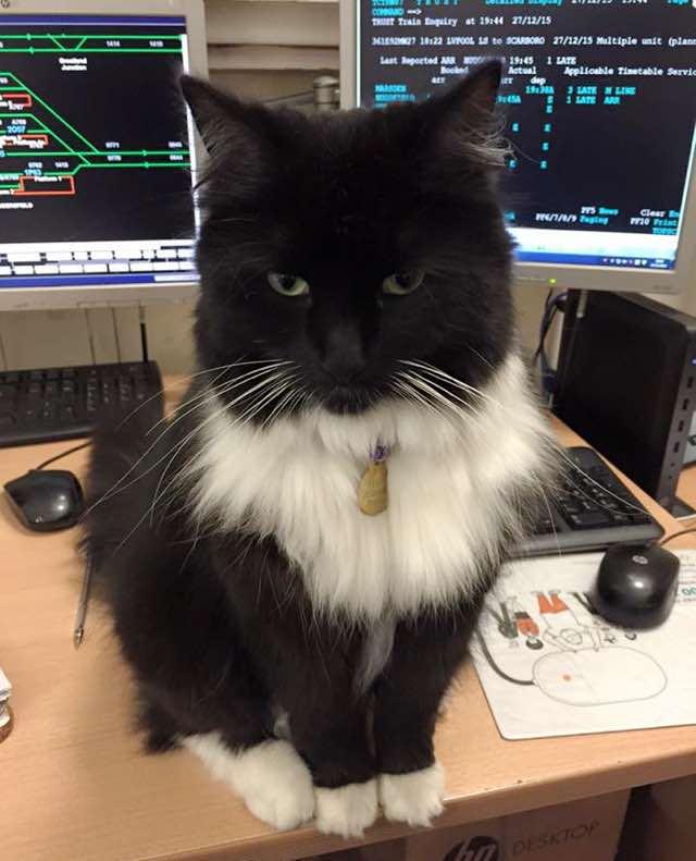 PCと駅猫