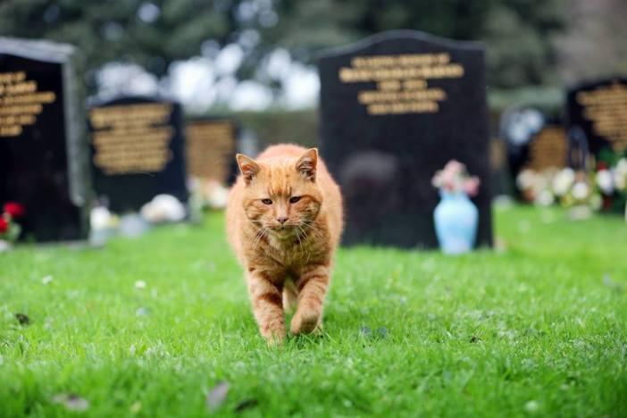 墓地を歩く猫