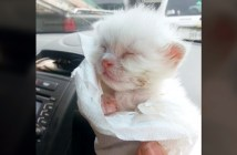 動物に襲われていた子猫