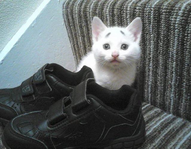 隠れる困り顔の猫