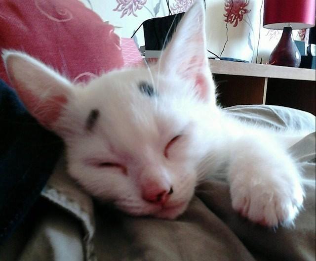 気持ち良さそうに眠る困り顔の猫