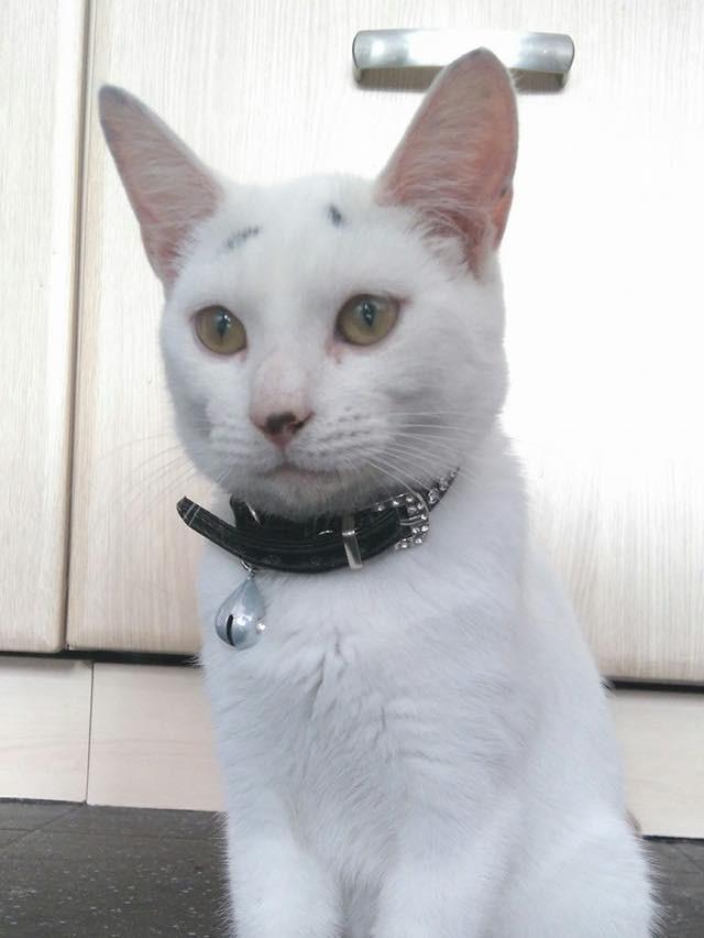 大人になっても困り顔の猫