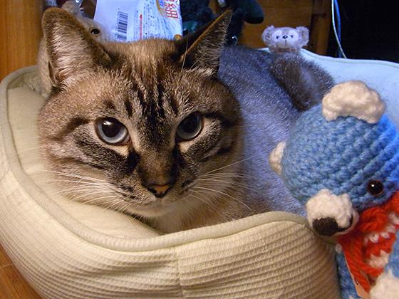 野良猫から家猫へ