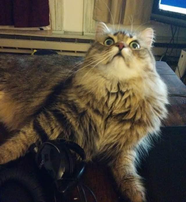 いい顔してる猫