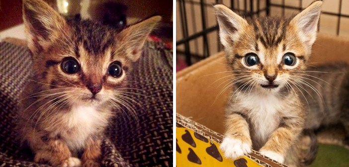 小さい子猫
