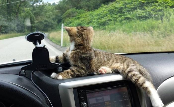 車に乗る子猫