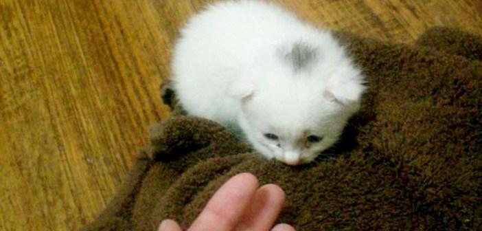 土砂降りの中助けられた子猫