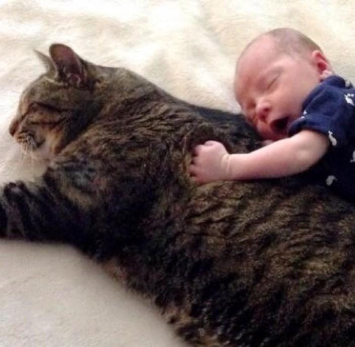 大きな猫にしがみつく赤ちゃん