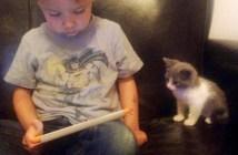 少年のボディーガードになった子猫